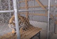 Zoo Veterinarian: Nerves of Steel Series
