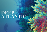 Deep Atlantic: Part I