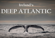 Deep Atlantic: Part II