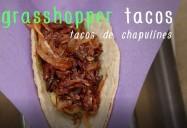 Grasshopper Tacos: Bug Bites Series