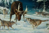 Isle Royale: Great Lakes Wild Series