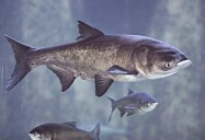 Invaders from the Deep: Great Lakes Wild Series