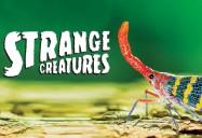 Strange Creatures Series