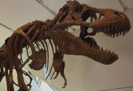 Dino Dynamics: Strange Creatures Series