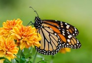 Pollinators: The Wild, Wild East