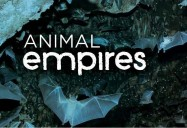 Animal Empires Series