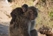 Family - Macaques, Flamingos, Manatees: Animal Empires Series