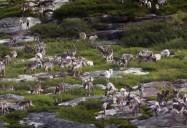 Migration: Caribou, Elephant Seals, Monarch Butterflies (Animal Empires Series)