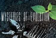 Interior: Mysteries of Evolution Series