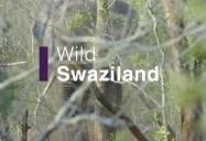 Wild Swaziland: Africa's Wild Horizons Series