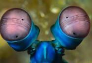 Ocean Oddballs: Strange Creatures Series