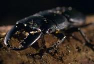 Giant Creepy Crawlers: Strange Creatures Series