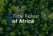 Tidal Forest of Africa: Waterworld Africa Series