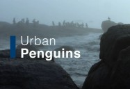 Urban Penguins: Waterworld Africa Series
