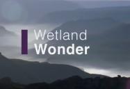 Wetland Wonder: Waterworld Africa Series