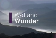 Wetland Wonder: Waterworld Africa Series