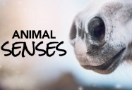 Animal Senses Series