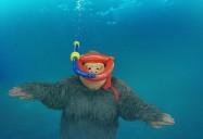 Fabulous Fish: Zoomoo's Wild Friends Series