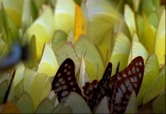 Butterflies and Caterpillars: ZooMoos Wild Friends Series