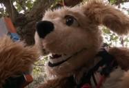 Ant Antics: ZooMoos Wild Friends Series