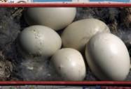Extraordinary Eggs: ZooMoos Wild Friends Series