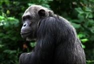 Body Language: Animals Decoded Series
