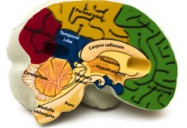 Into the Mind: Broken Brains