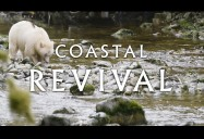 The Spirit Bear: Coastal Revival Series