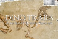 Dino Trails Series
