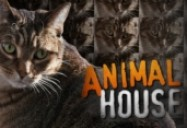 Animal House: When Keeping Pets Turns from Caring to Cruelty (W5)