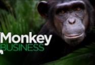 Monkey Business: W5