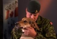 Canine Comrades: W5