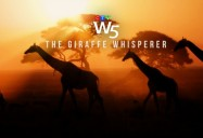 The Giraffe Whisperer - The Legacy of Biologist Anne Innis Dagg: W5