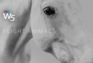 Flight Animals: W5