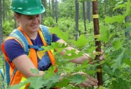 The Road to Sustainability: Trees, Youth, Our Future Series