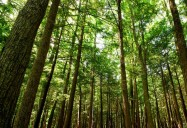 New Forests, New Stewards, A Road Forward: Trees, Youth, Our Future Series