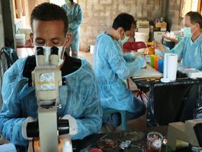Épidémies, la menace invisible