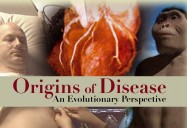 Origins Of Disease: An Evolutionary Perspective