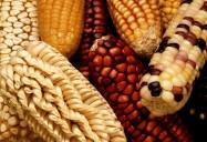 Maize - Ancient Grains: Nutritional Powerhouses Series