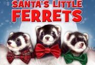 Santa's Little Ferrets