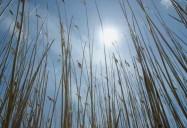 Long Point Biosphere Reserve, Ontario (Episode 8): Striking Balance Series 1