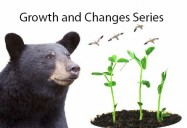 Growth and Changes Series