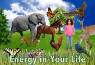 Energy in Your Life