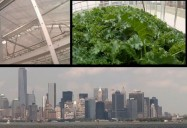Rooftop Gardens - Ep. 406: Planet Echo (Season 4)