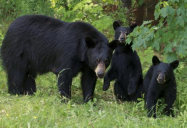 Bear With Me: A Young Person's Guide to Black Bear Safety