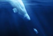 A Plastic Ocean (100 Minute Version)