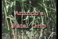 ARUNDO'S FATAL GRIP: Controlling Invasive..