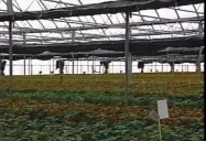INTEGRATED PEST MANAGEMENT IN GREENHOUSES