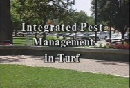 INTEGRATED PEST MANAGEMENT IN TURF