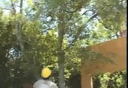 Pruning Ornamental Trees